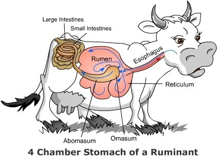 Nutrition In Animals Life Science